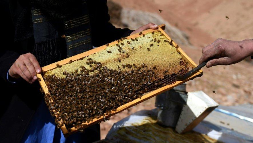 La coopérative de Yakawlang a collecté environ 400 kilos de miel en 2016
