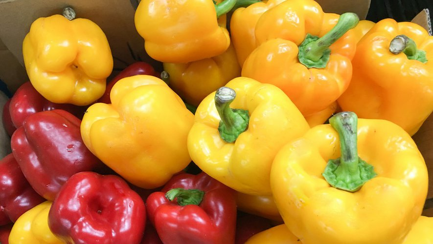 Menu-santé : le poivron, star au soleil !