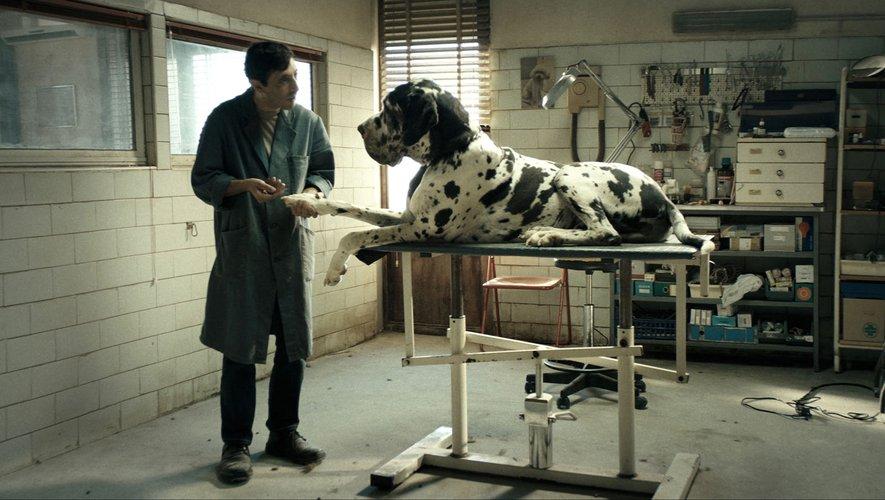 """Dans """"Dogman"""" (de Matteo Garrone), les chiens sont omniprésents autour de Marcello, toiletteur de son métier."""