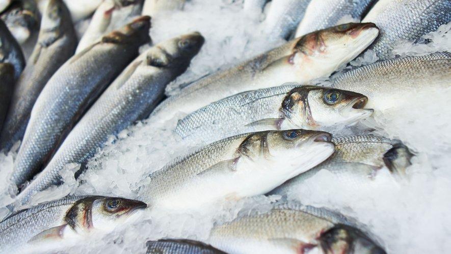 La quantité optimale de poisson pouvant être consommée pendant la grossesse serait d'au moins deux portions de poisson par semaine afin d'assurer de bons apports nutritionnels aux enfants à naître.