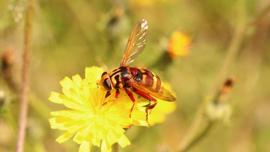 Un essaim d'abeilles a piqué près de 200 fois une nonagénaire.