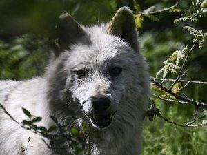 FILES-GREECE-ANIMAL-ENVIRONMENT-NATURE