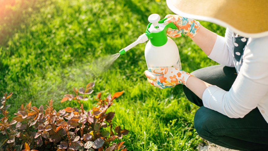 L'utilisation des pesticides a globalement augmenté de 12% entre 2014 et 2016