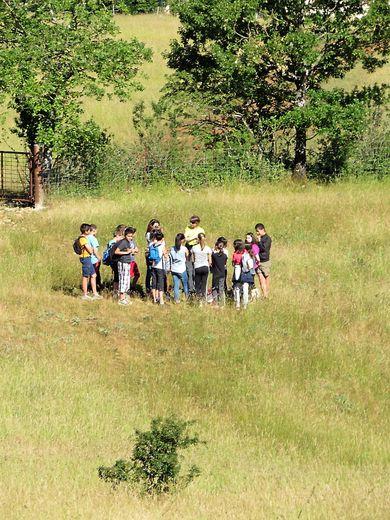 Ces pelouses et prairies menacées de disparition Les balades thématiques du CPIE