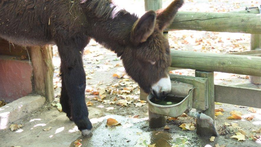 Un petit degré d'attention en plus dans les parcs animaliers Troupeaux : une préoccupation quotidienne