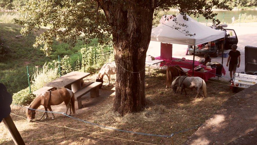Un petit moment de détentepour les poneys.