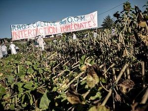 """Les Faucheurs demandent notamment """" l'interdiction immédiate de la vente de semences de plantes mutées """"."""
