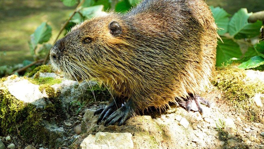 Découvrir les richesses du Lévezou et observer les castors