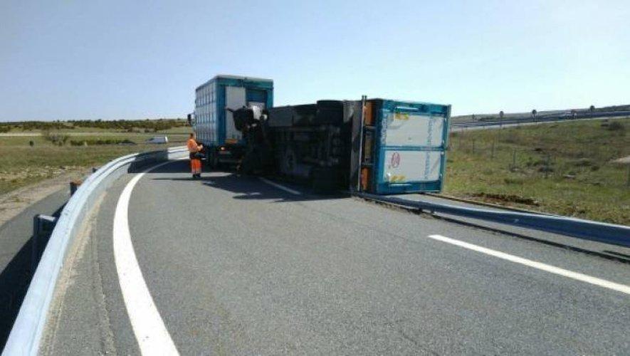 Le camion transportait une vingtaine de cochons.