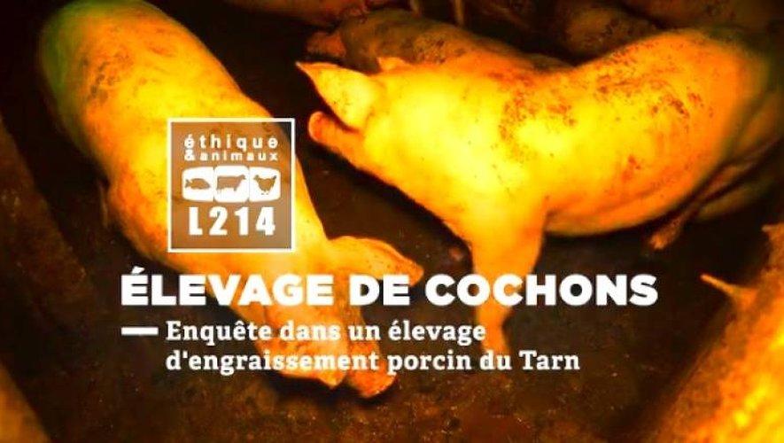Maltraitance animale : L214 publie la vidéo choc d'un élevage porcin du Tarn