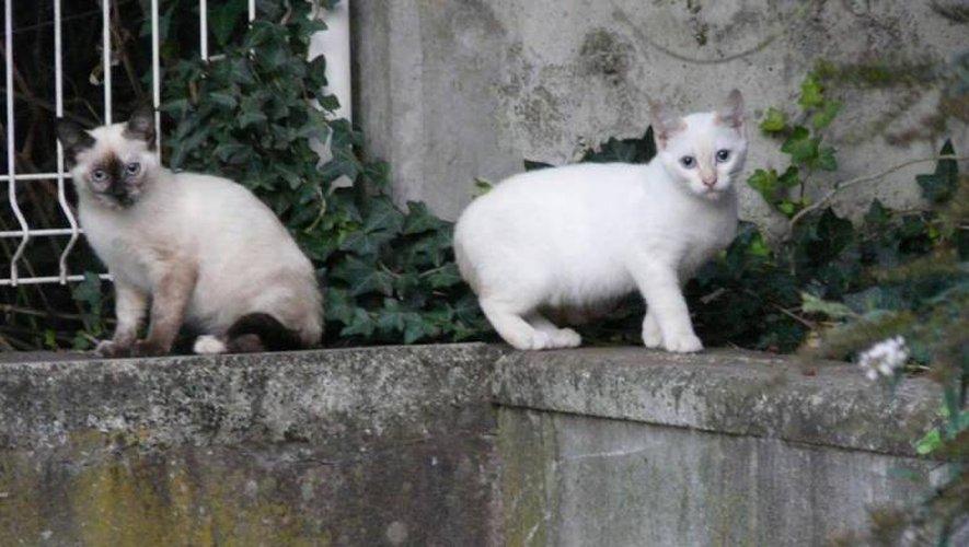 Les chats sont souvent les premières victimes.