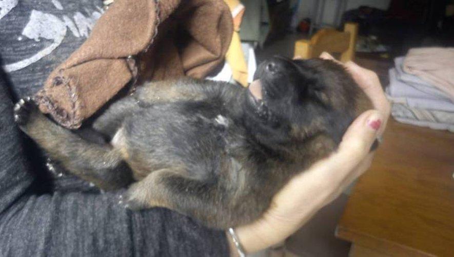 La petite Ouba est aujourd'hui entre les mains de l'association d'aide aux animaux abandonnés de Decazeville.