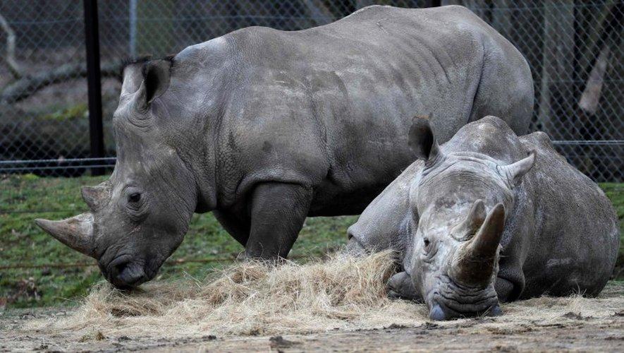 Une dizaine d'enquêteurs mobilisés pour le meurtre de «Vince», le rhinocéros