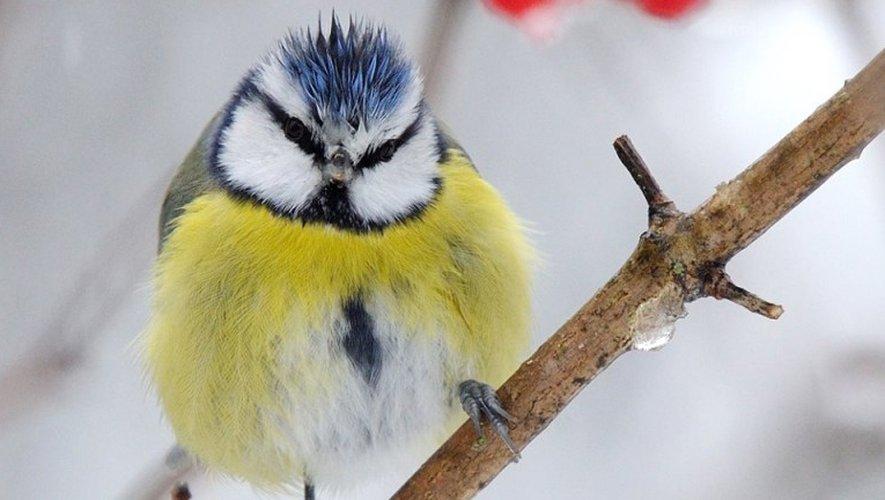Les 28 et 29 janvier 2017, c'est le comptage national des oiseaux des jardins