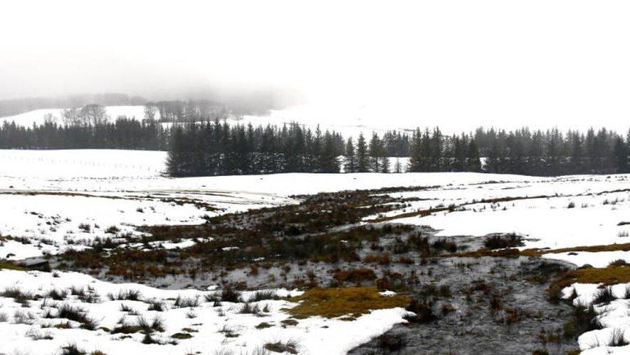 Sur l'Aubrac, la pluie et redoux ont mis à mal le manteau neigeux...