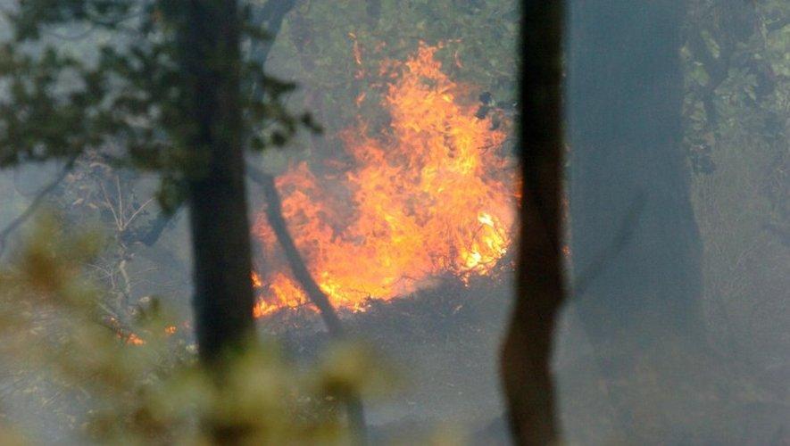 Au total, une demi-douzaine d'hectares ont été détruits.