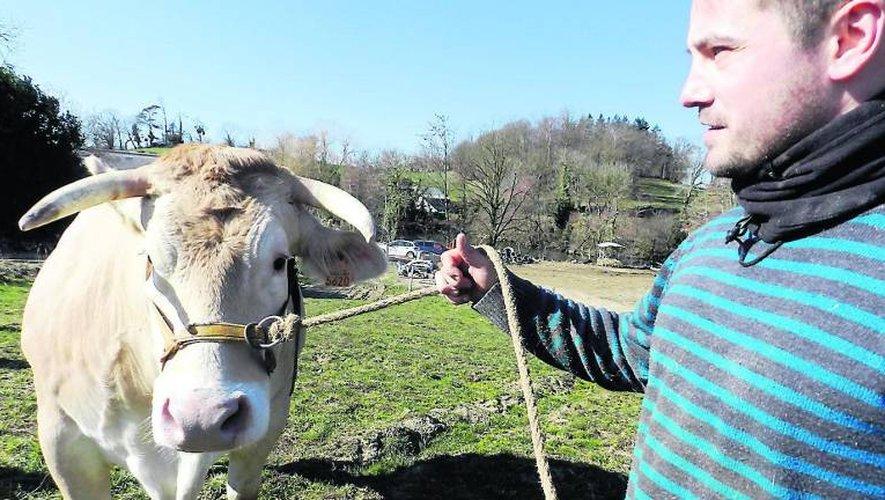 Cyprien Alcouffe avec Hibelle, une blonde d'Aquitaine âgée de 5 ans,