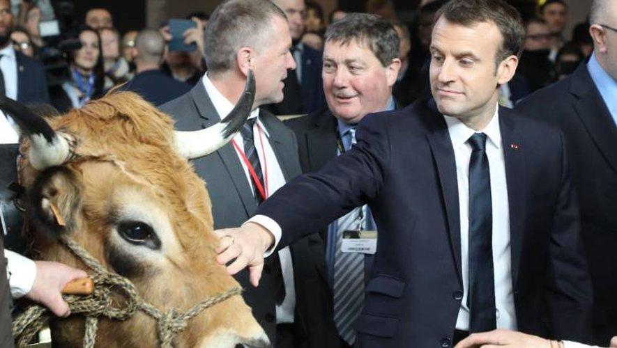 Un président de la République visiblement curieux de découvrir ces vaches typiques du sud de la France (Photo AFP)