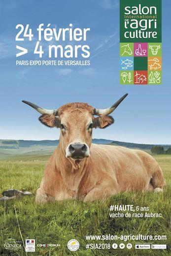Trois choses à savoir sur Haute, l'Aubrac égérie du futur Salon de l'Agriculture