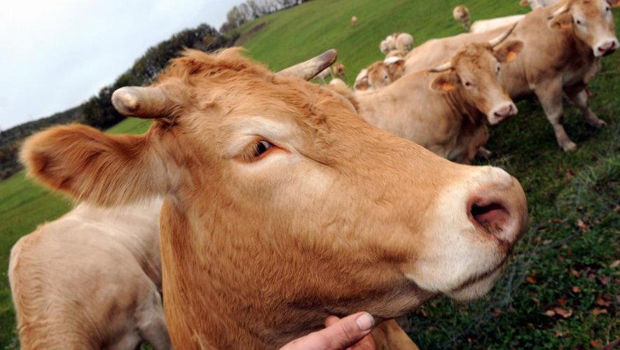 Aveyron : ce week-end, neuf fermes ouvrent leurs portes au public