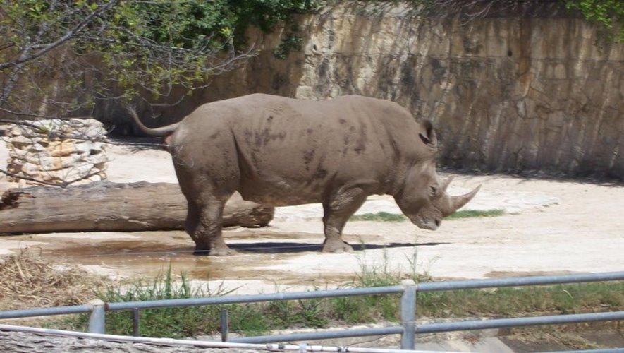 Un rhinocéros abattu par balles au zoo de Thoiry, grand frère du parc du Colombier