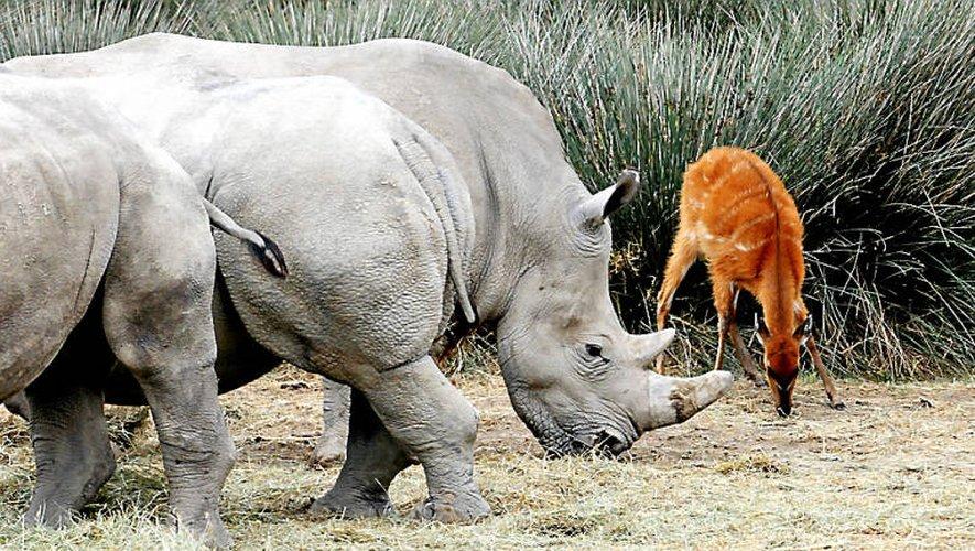 La réserve animalière Sigean 2 à Millau: le projet en voie d'abandon