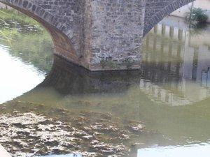 Les algues vertes de retour dans les cours d'eau aveyronnais: on vous dit pourquoi
