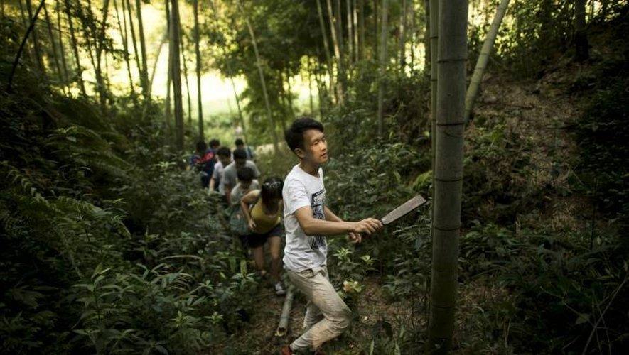 """Chen Chao frappe sur les bambous qui abritent sa cuvée de l'année pour surveiller l'état de son """"chai"""" en plein air, le 30 juillet 2016 à Yibin, dans le sud-ouest de la Chine"""