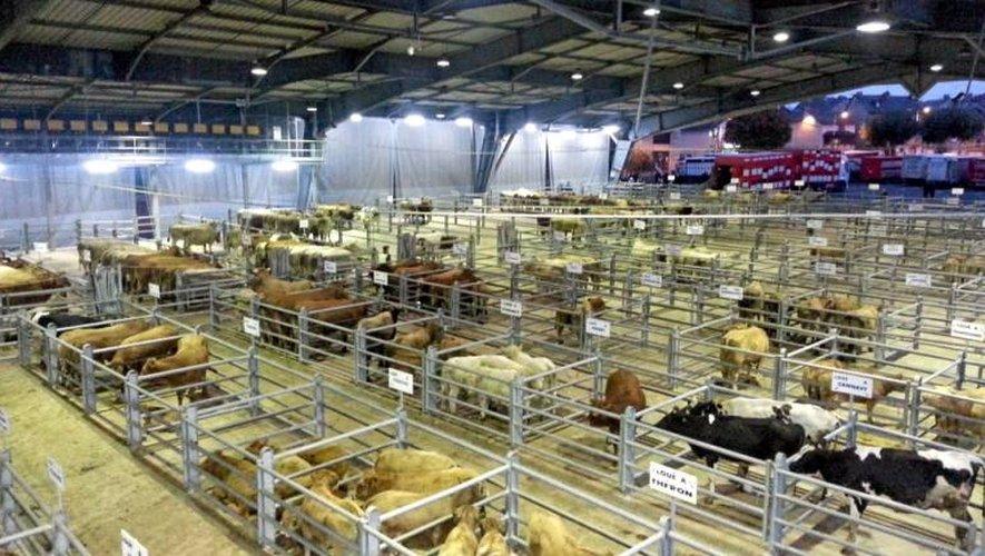 Drame au marché de Laissac : le propriétaire de la vache condamné