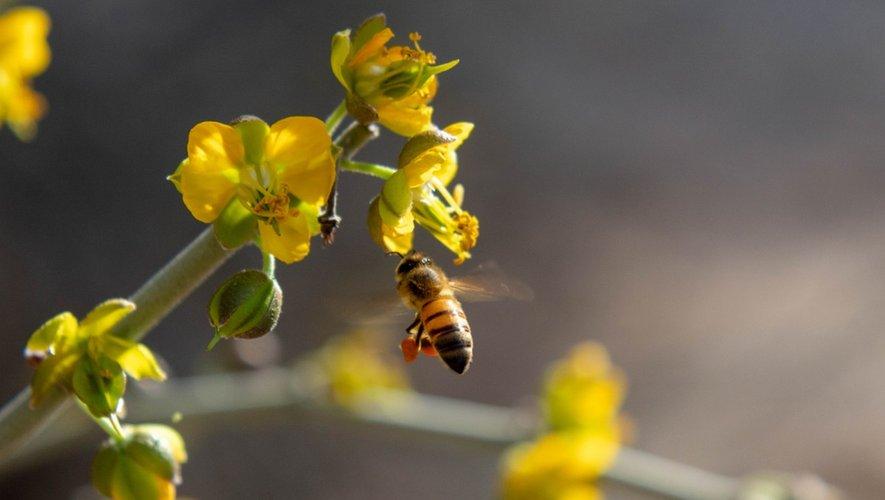 Insecticides : 5 néonicotinoïdes interdits en France