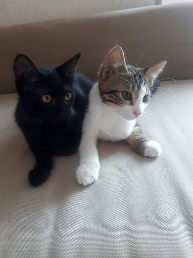 Chat libre 12 : samedi, une vingtaine  de chatons à rencontrer... et à adopter