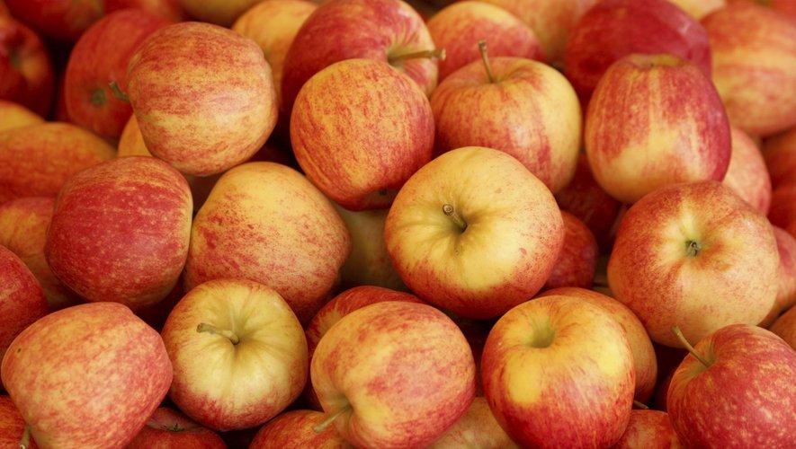 Baromètre des produits frais : mangez des pommes