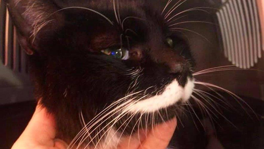 Noirou, un chat perdu à Millau a été retrouvé à plus de 1000 km de l'Aveyron !