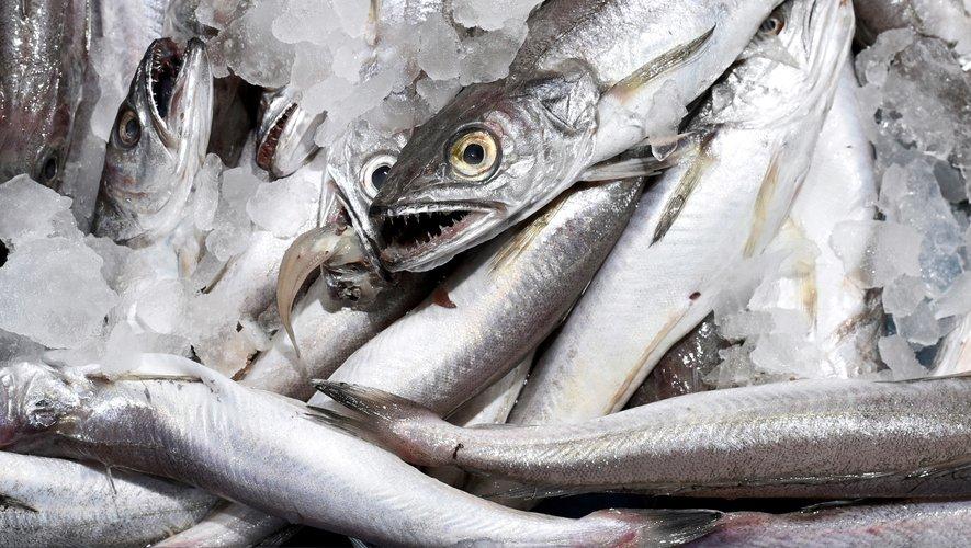 Le prix du merlu entier de plus de 1 kilo a augmenté de 29% en une semaine.