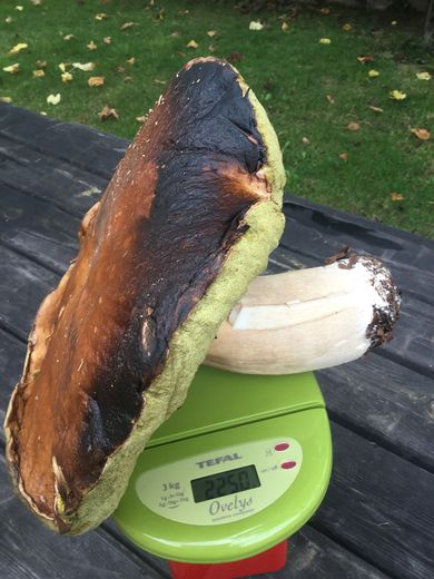 Un cèpe de plus de 2 kg découvert en Aveyron