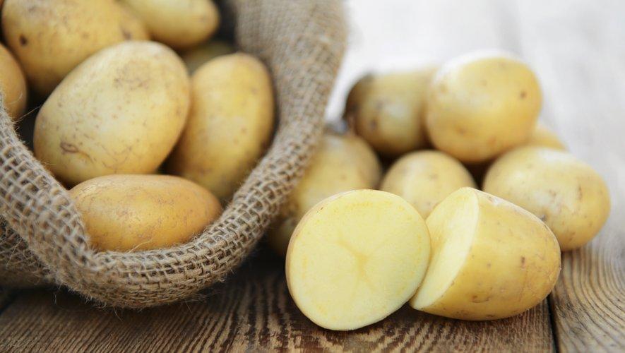 La pomme de terre est le féculent préféré des Français