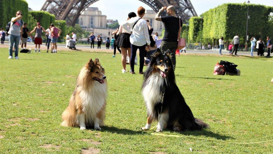 Il y a une dizaine d'espaces dans lesquels peuvent se promener sans laisse les quelque 100.000 chiens recensés dans Paris.