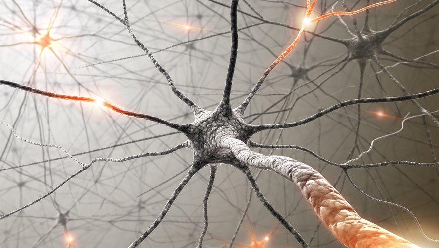 Les cellules du corps se renouvellent constamment, à l'inverse des neurones dans le cortex, qui durent toute la vie de l'individu.