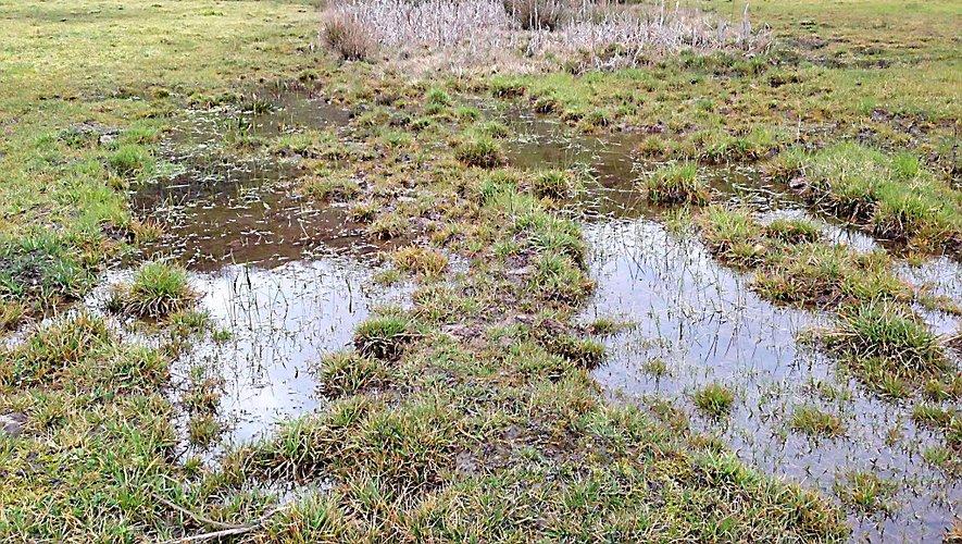 Les zones humides sont un creuset pour la faune et la flore.