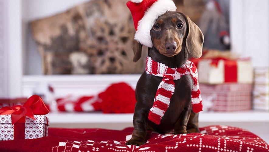 Un chien sur deux aurait l'habitude de recevoir un cadeau de la part de son entourage