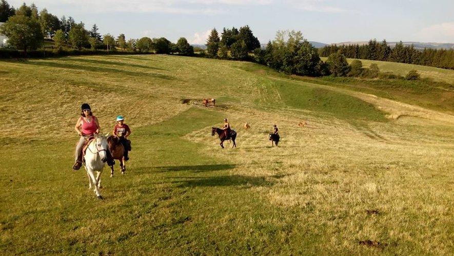 Les chevaux prennent ou retrouvent goûtà la vie en liberté.