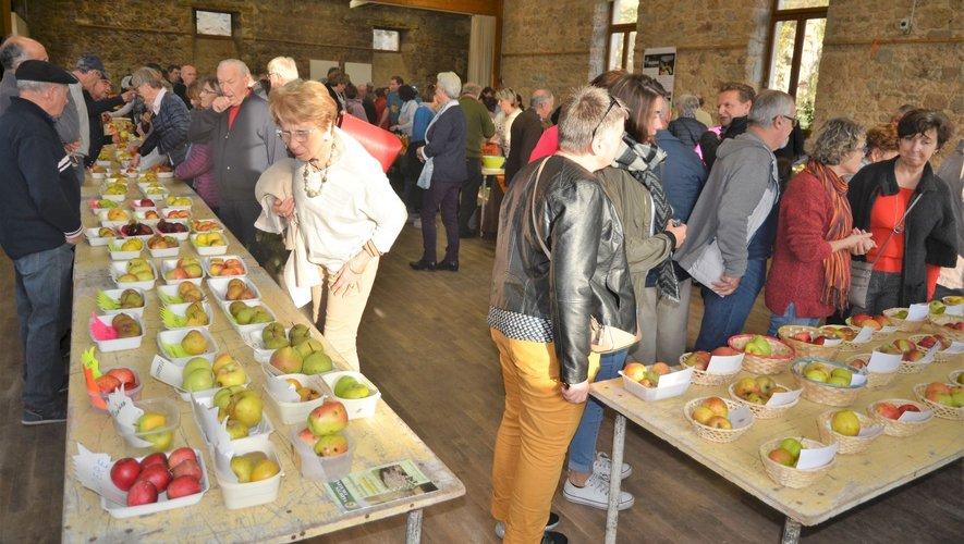 Toutes les sections locales du département sont venues présenter 150 variétés de pommes.