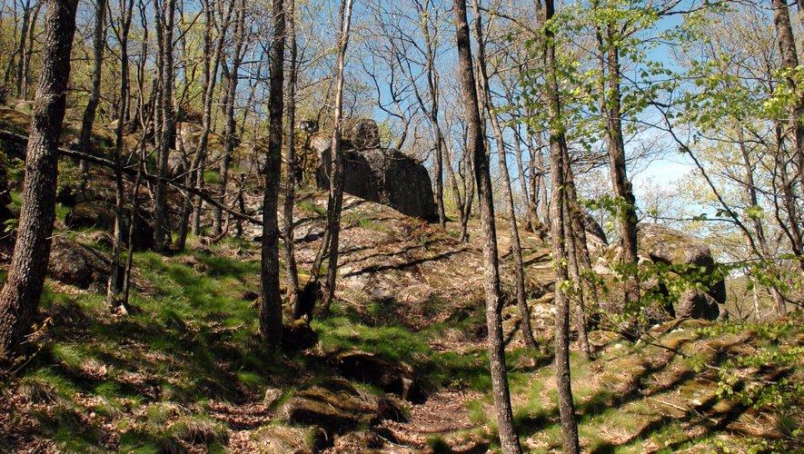 Les choix d'aujourd'hui dessineront les paysages de demain dans l'exploitation des forêts.
