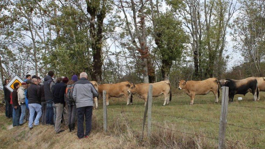 Des agriculteurs venus de différentes régions de France ont visité l'exploitation de Roland Carriéà Vitrac-en-Viadène.