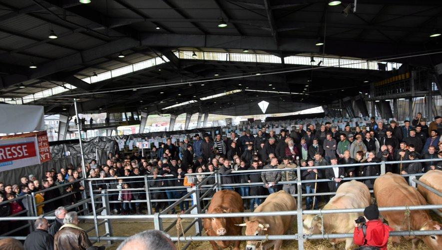Beaucoup de belles bêtes et de visiteurs  samedi au concours de Laissac.