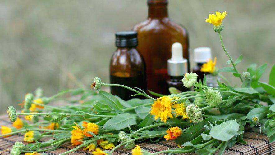 L'huile essentielle de gousse d'ail efficace contre la bactérie responsable de la maladie de Lyme