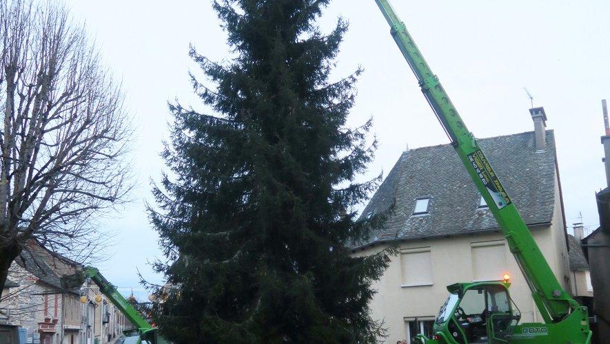 Du haut de ses 18 mètres,le sapin s'installe pour les fêtes