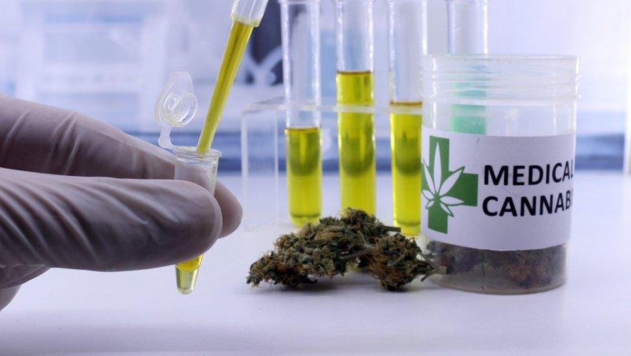 Feu vert pour le cannabis thérapeutique