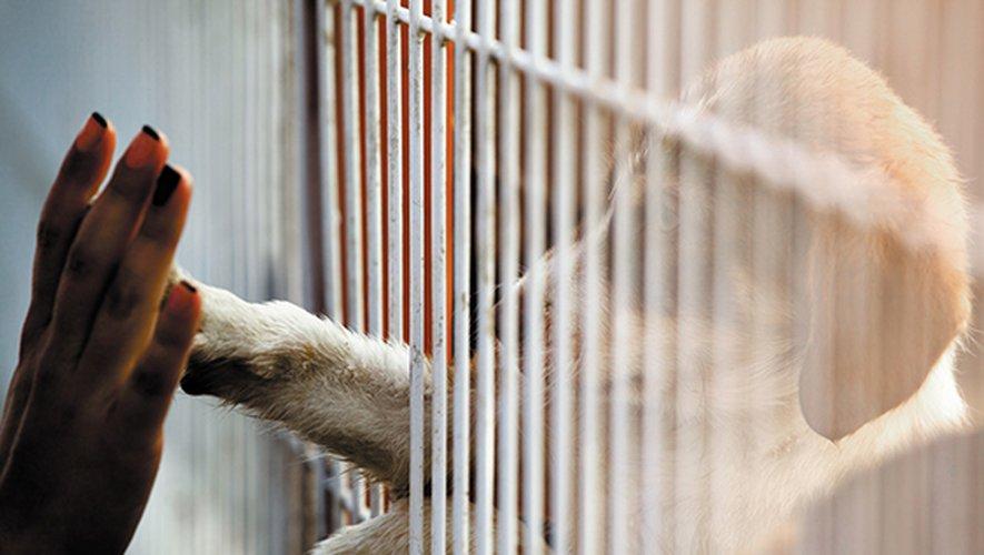 La Grande-Bretagne va interdire aux animaleries la vente de chiens et de chats de moins de 6 mois, pour enrayer l'exploitation et les mauvais traitements faits aux animaux de compagnie