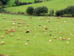Une élection qui concerne l'ensemble du monde agricole.
